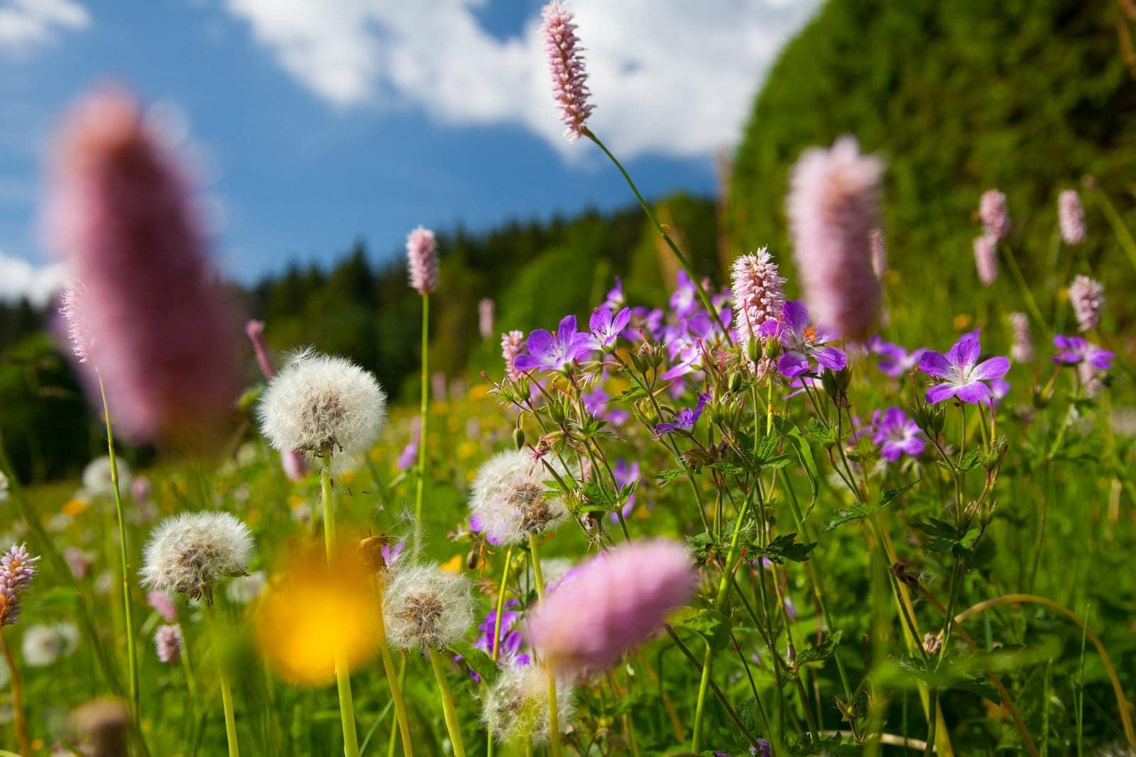 """""""Rettet die Wildbienen"""" – Workshop zum Bau von Insektenhotels am Samstag, 18. Mai in Fröhnd (Kreis Lörrach)"""