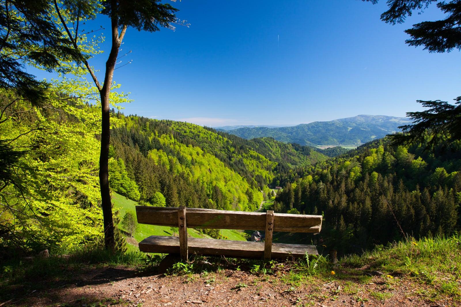 Biosphärengebiet Schwarzwald Aussicht
