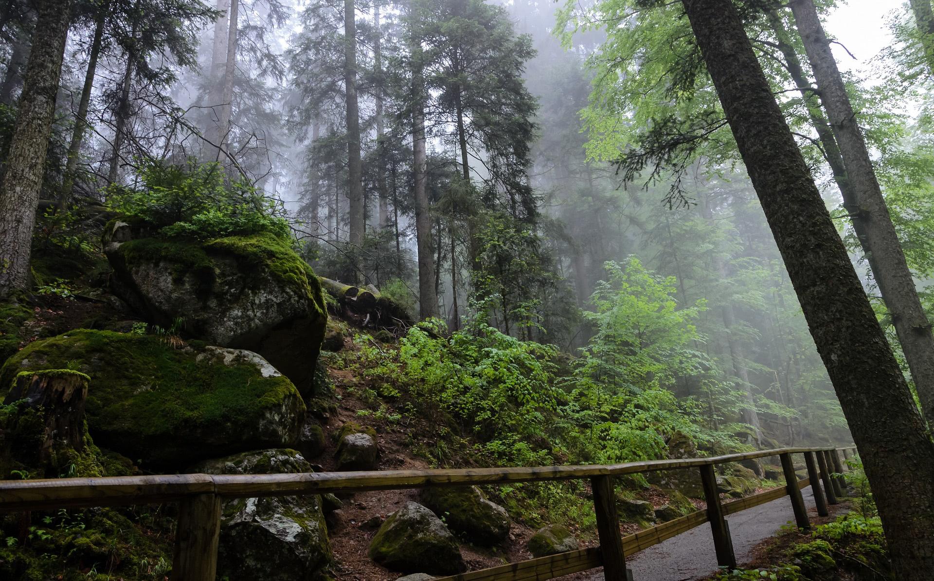 """""""Schutz und Nutzung der Natur – ein Widerspruch?"""" ist Thema einer Tagung zur Nutzungsethik von Fleisch und Holz auf dem Feldberg am 7. Juni"""