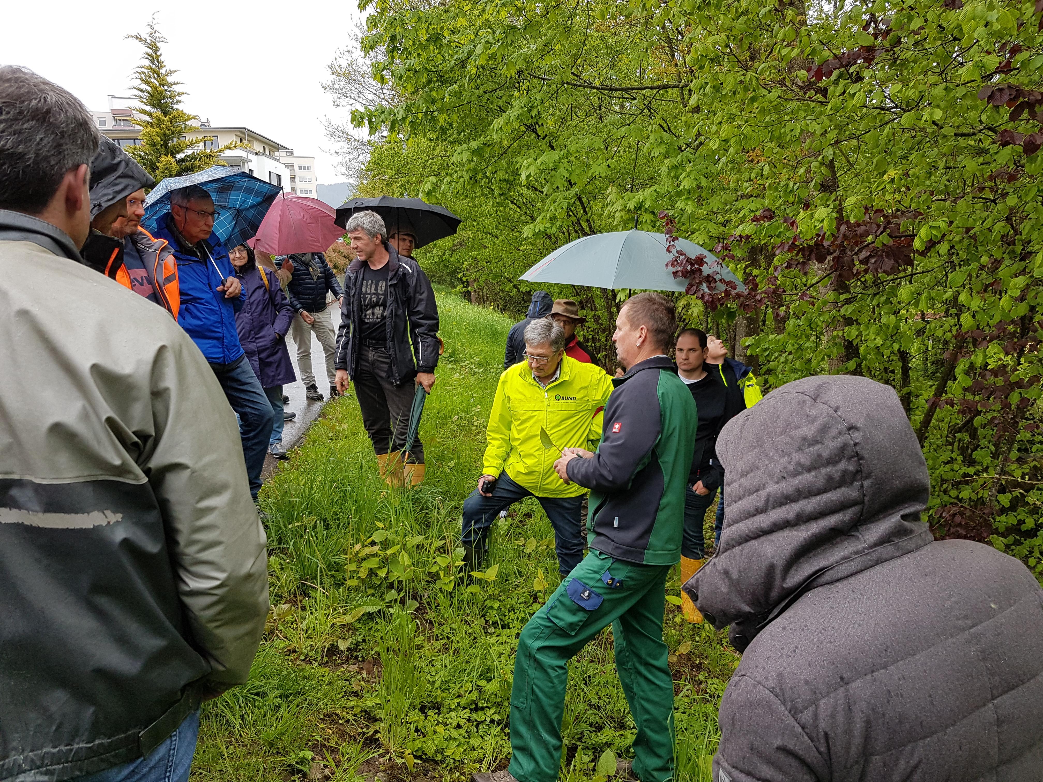 """""""Stopp den Staudenknöterich"""": Mehr als 50 Experten und ehrenamtliche Naturschützer diskutieren in Schopfheim (Kreis Lörrach) die Regulierung der invasiven Pflanze"""