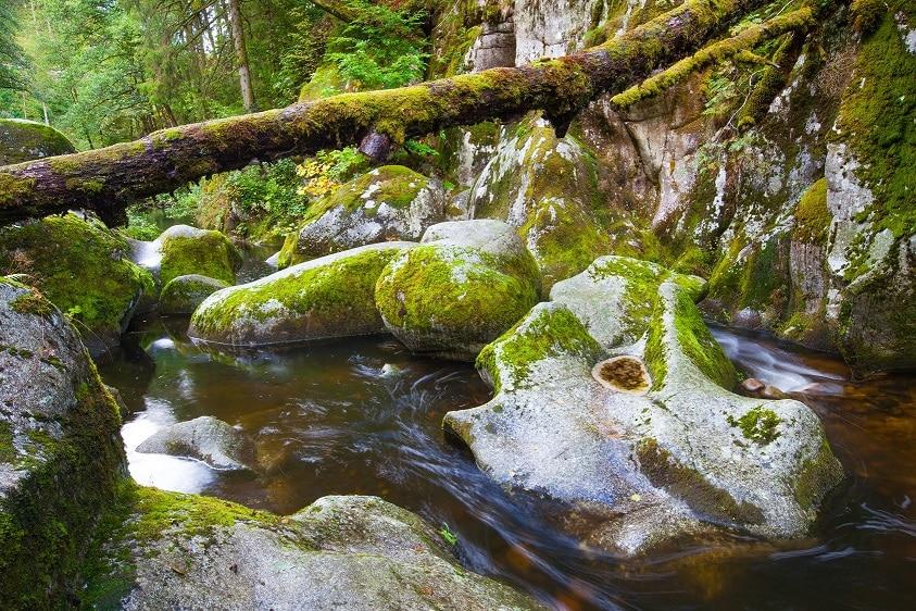 Jetzt abstimmen! Bei der Wahl zum Naturwunder 2019 geht das Biosphärengebiet Schwarzwald mit der Teufelsküche im Albtal ins Rennen