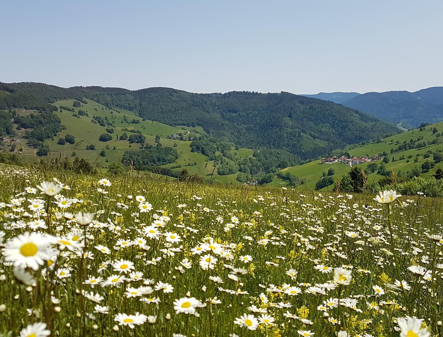 Biosphärengebiet Schwarzwald sucht neue Projektideen: Infoveranstaltung zum Förderprogramm am Dienstag, 23. Juli