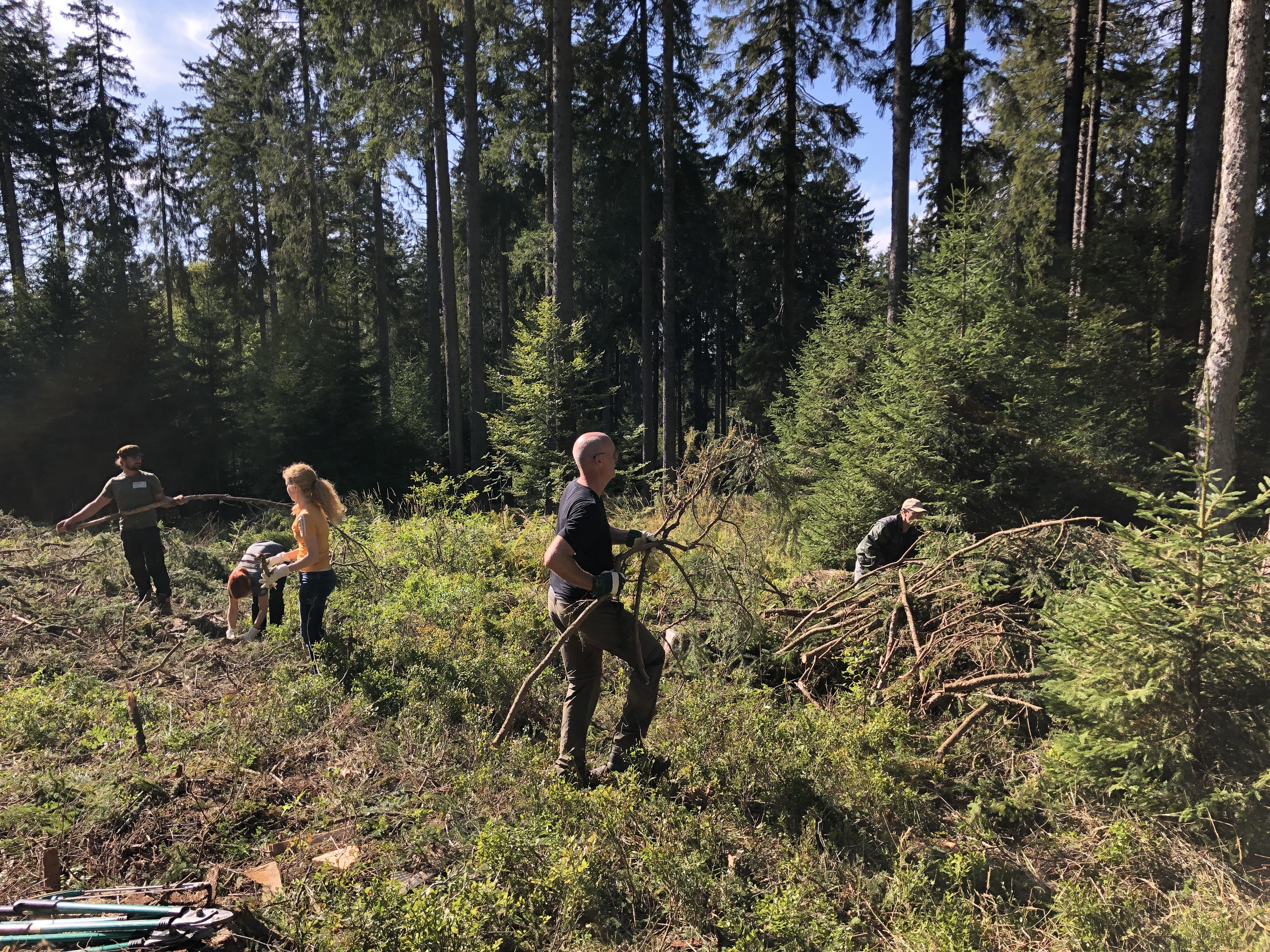 Zwei internationale Firmen engagieren sich bei der Landschaftspflege im Biosphärengebiet Schwarzwald