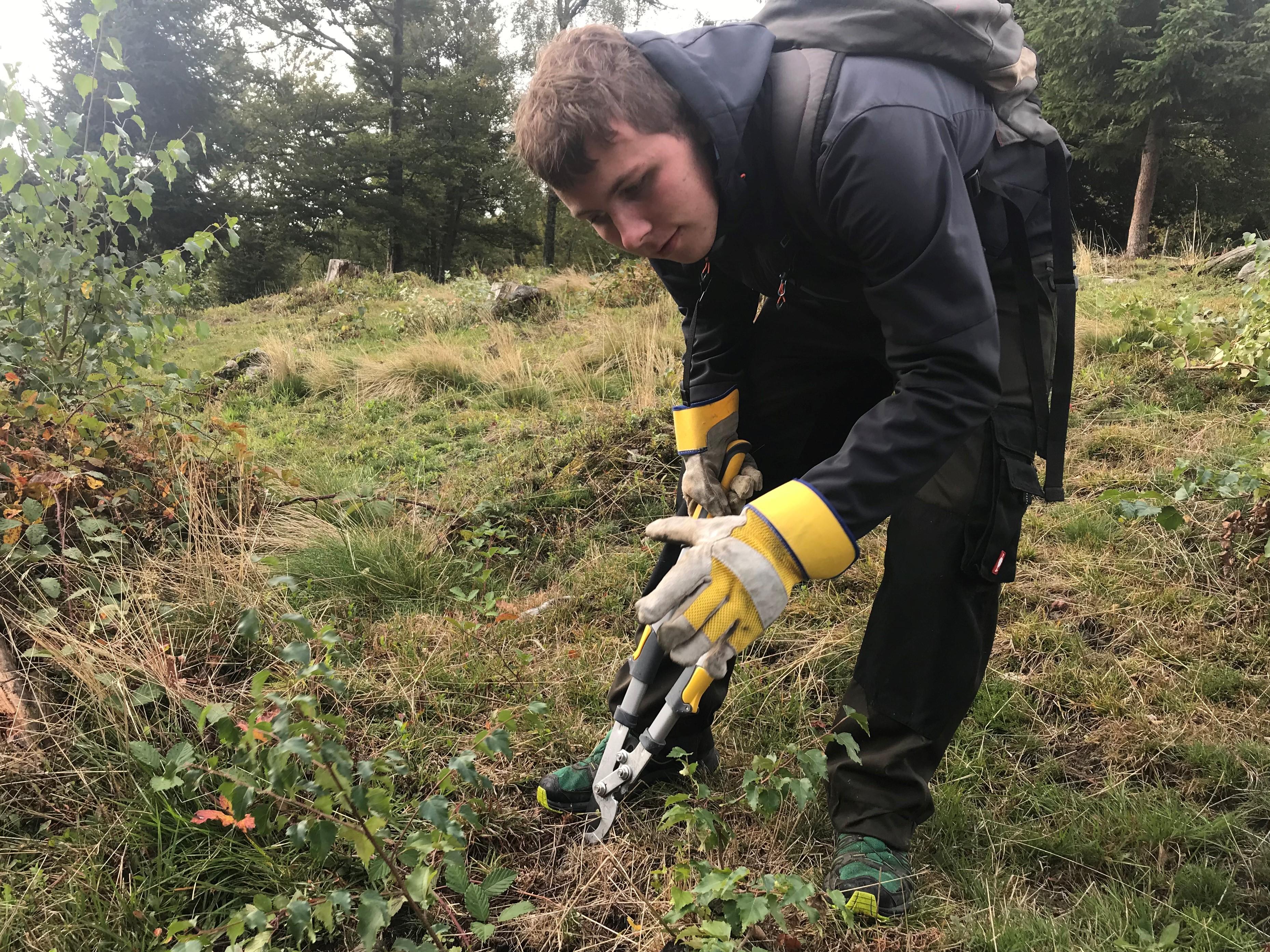 Landschaftspflege im Biosphärengebiet: 20 Helferinnen und Helfer befreien Kreuzfelsen in Dachsberg-Wittenschwand (Kreis Waldshut) von Bewuchs