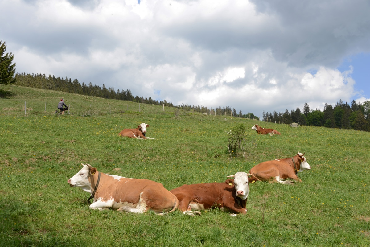 Landnutzerinnen und Landnutzer können Rahmenkonzept mitgestalten