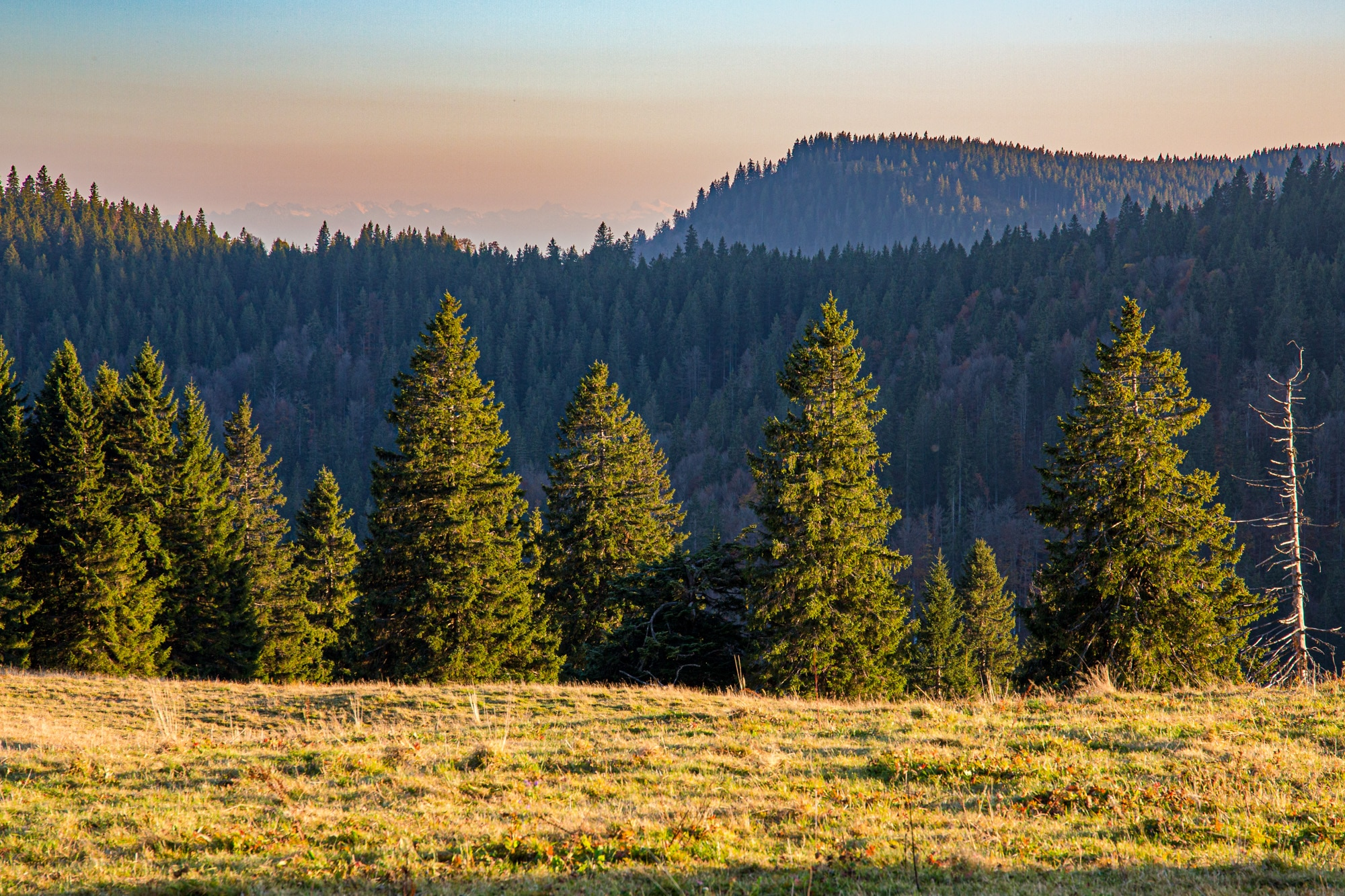 Herbstliche Foto-Spaziergänge im Biosphärengebiet Schwarzwald