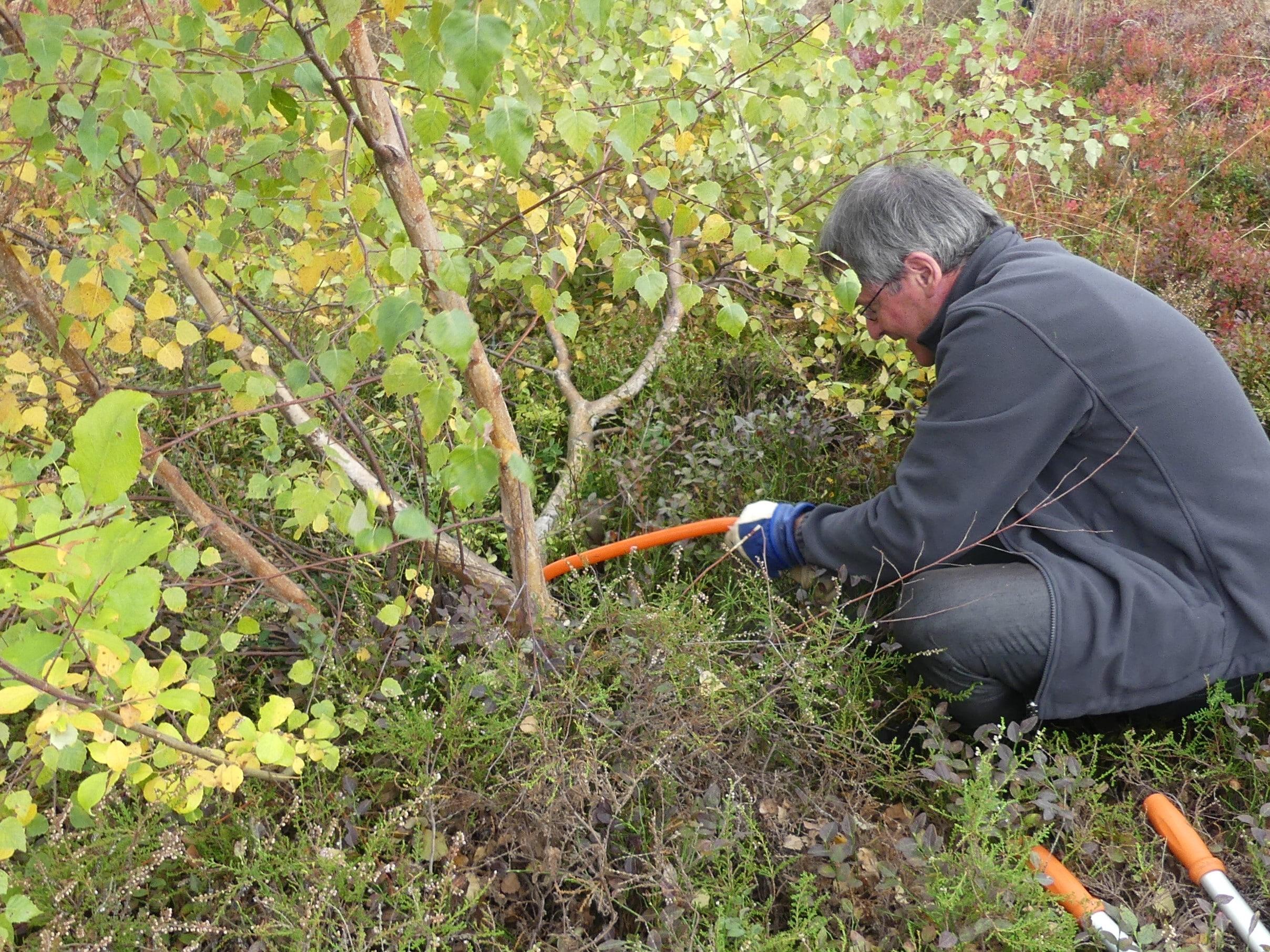 Gemeinsam anpacken für die Natur: Biosphärengebiet Schwarzwald und Gemeinde Fröhnd laden zum Landschaftspflegetag am 17. Oktober ein