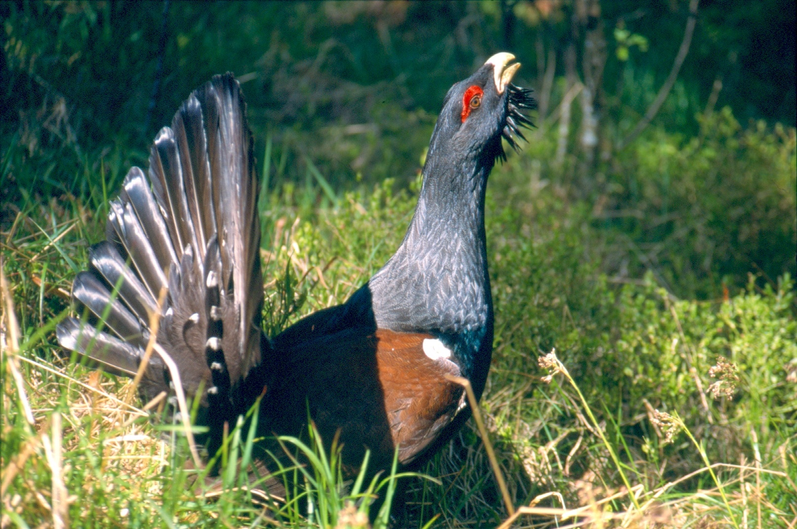 Erholungssuchende dringen in Schutzzonen seltener Tiere im Biosphärengebiet Schwarzwald vor